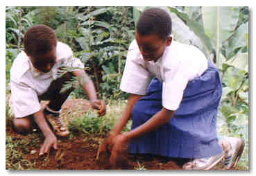The All School's Tree Nursery Competition was supported by Peace Corps