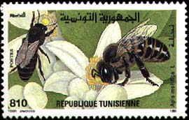 Tunisia RPCV Joseph Koehring is the state apiary inspector for six counties