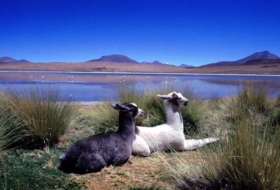  Peace Corps Bolivia