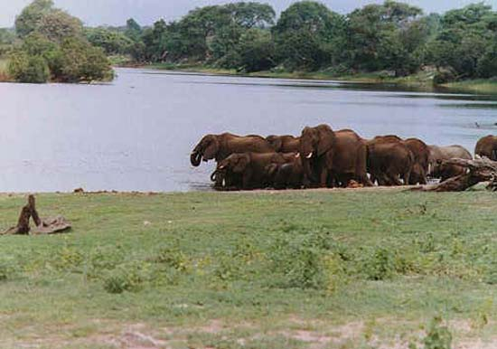 1985: morgan staggers served in Botswana beginning in 1985