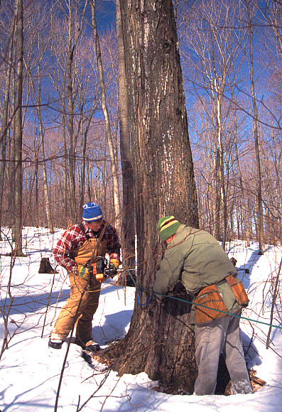 RPCV Dan Berger's love for making maple syrup runs deep