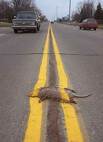Paraguay RPCV Ed Shamy writes: Measure a state by its treatment of roadkill