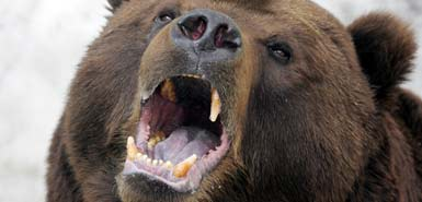 Romania struggles with bear invasions after deadly attack on Bangladesh RPCV Kathryn Evans