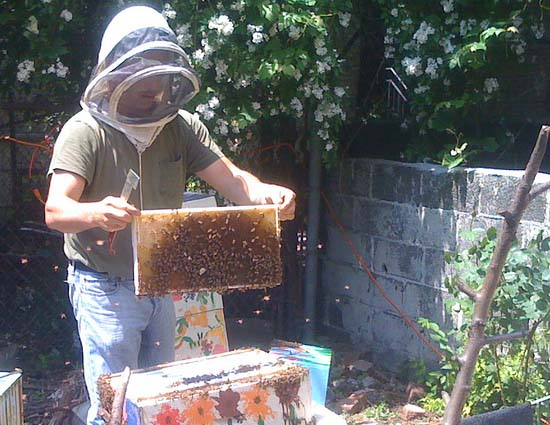 Therese Abalo  took a job with a beekeeper to join the Peace Corps