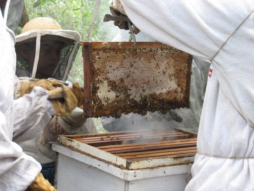 Mary Cinadr is a Peace Corps volunteer serving as a small-business adviser and beekeeper in Paraguay