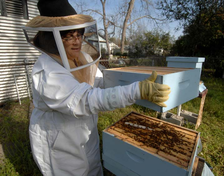 Paraguay RPCV Denice Traina hopes hives will help Harrisburg