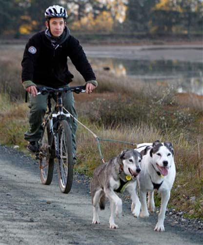 Mark Chin's bond with huskies was formed during a summer job with an Alaskan tour company, after working in Zambia, Africa, in the Peace Corps
