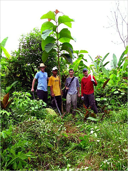 While working in eastern Panama between 2002 and 2006, four young Peace Corps volunteers conceived of a plan to help restore the region�s disappearing tropical forests, provide income for struggling landowners and make money for investors and themselves
