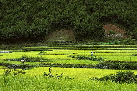 صور عن كوريا الجنوبية